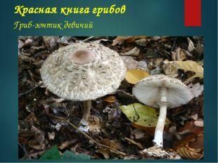 Красная книга грибов Гриб-зонтик девичий