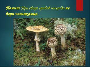Помни! При сборе грибов никогда не бери незнакомые.