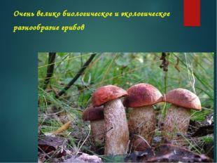 Очень великобиологическоеи экологическое разнообразие грибов