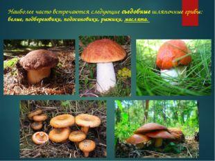 Наиболее часто встречаются следующие съедобные шляпочные грибы: белые, подбер