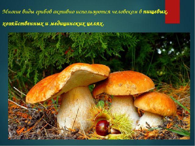 Многие виды грибов активно используютсячеловекомв пищевых, хозяйственных и...