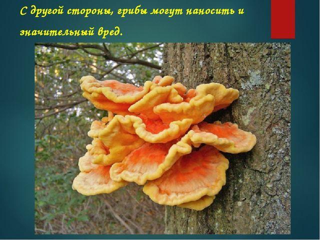 С другой стороны, грибы могут наносить и значительный вред.