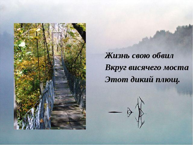 Жизнь свою обвил Вкруг висячего моста Этот дикий плющ.