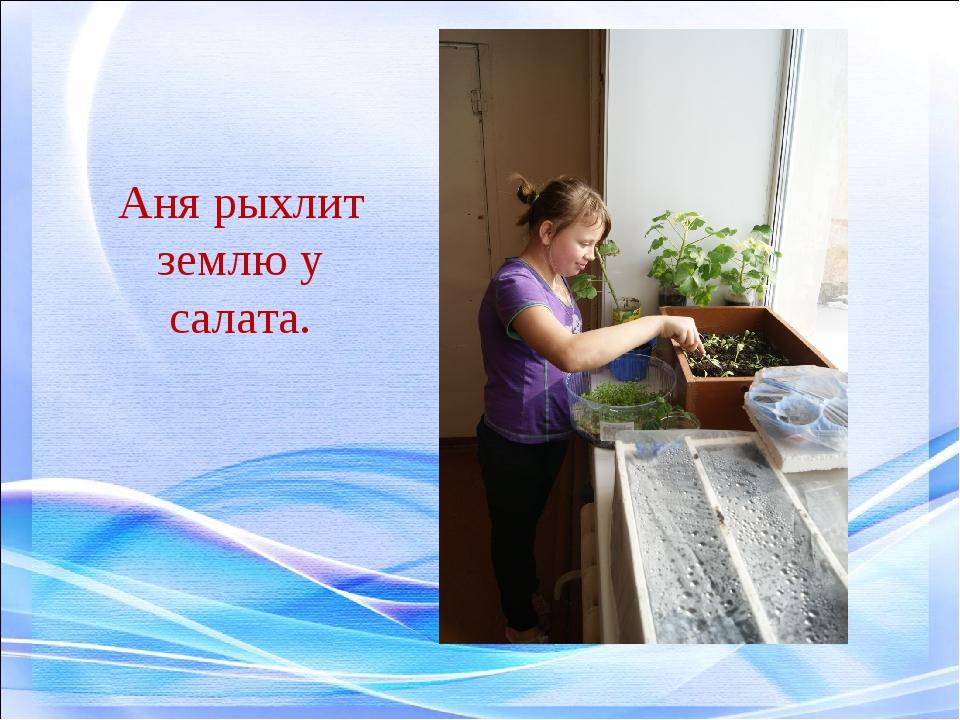 Аня рыхлит землю у салата.