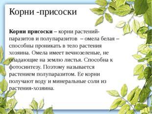 Корни -присоски Корни присоски– корни растений-паразитов и полупаразитов –