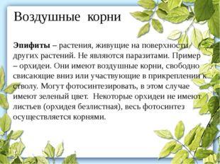 Воздушные корни Эпифиты– растения, живущие на поверхности других растений. Н