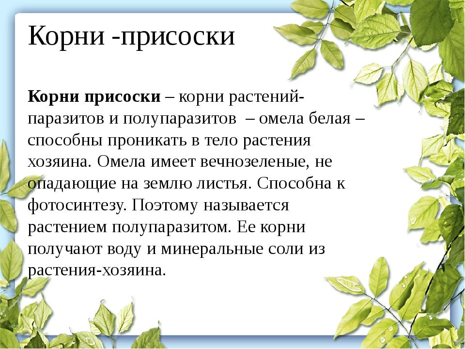 Корни -присоски Корни присоски– корни растений-паразитов и полупаразитов –...