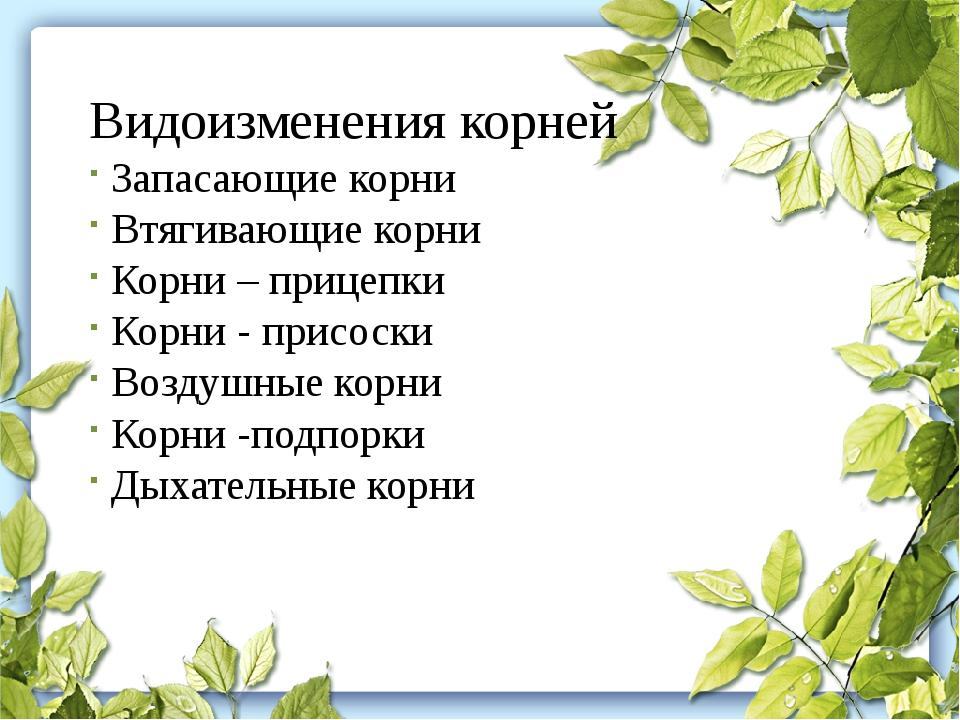 Видоизменения корней Запасающие корни Втягивающие корни Корни – прицепки Корн...