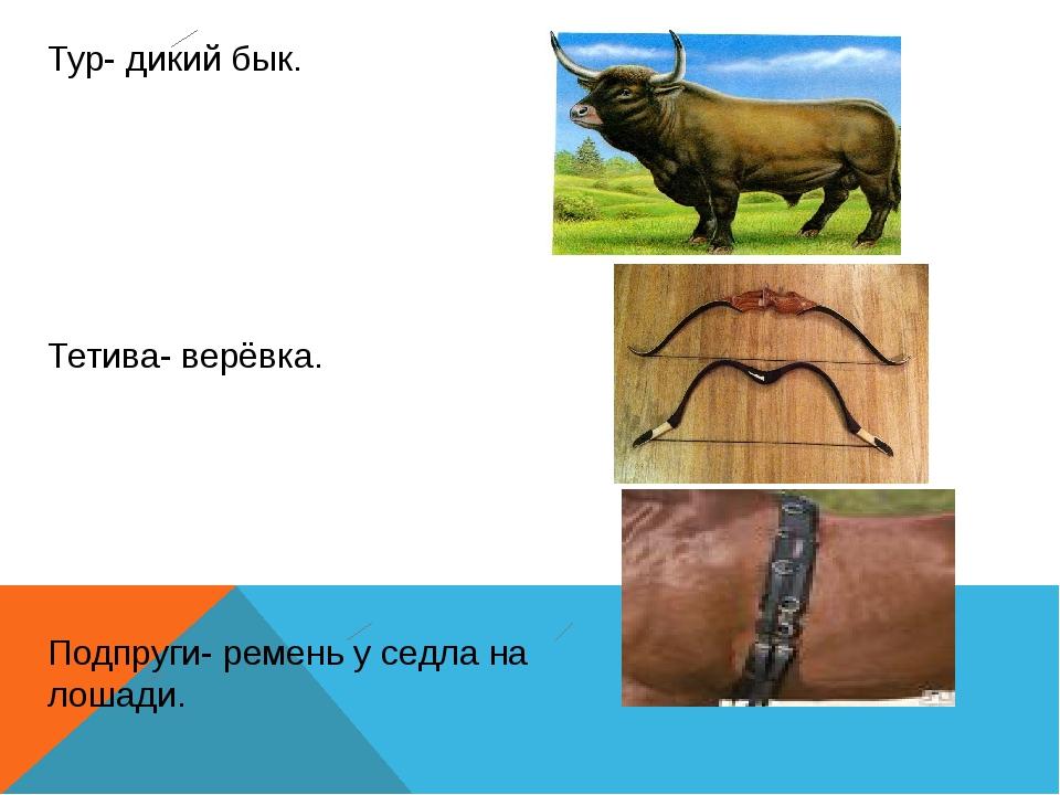 Тур- дикий бык. Тетива- верёвка. Подпруги- ремень у седла на лошади.