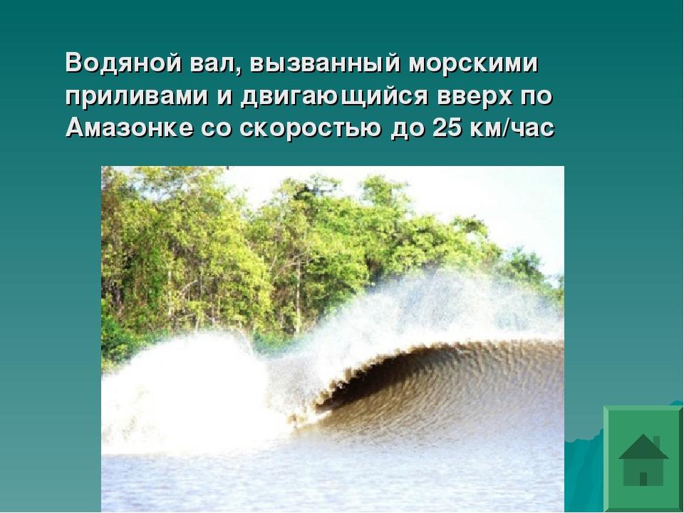 Водяной вал, вызванный морскими приливами и двигающийся вверх по Амазонке со...