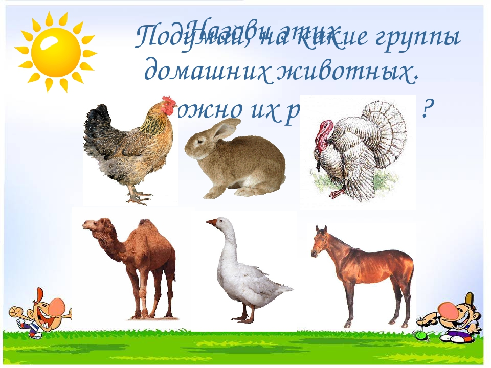 Подумай, на какие группы можно их разделить ? Назови этих домашних животных.