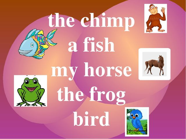 the chimp a fish my horse the frog bird