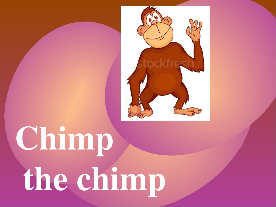 Chimp the chimp