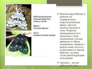 Индустриальный меланизм у бабочек Многие виды бабочек в районах не подверженн