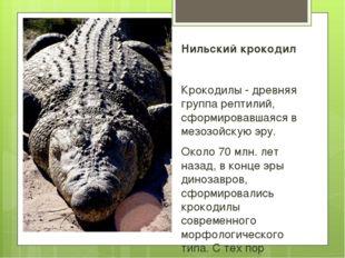 Нильский крокодил Крокодилы - древняя группа рептилий, сформировавшаяся в мез