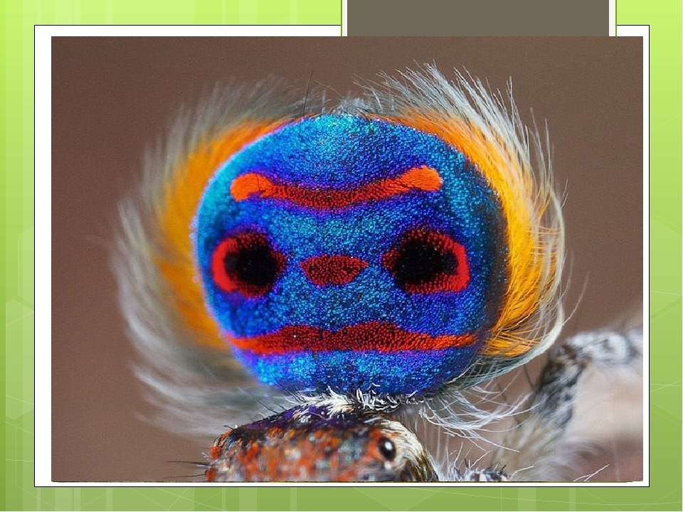 Примеры яркой окраски у самцов разных видов