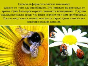 Окраска и форма тела многих насекомых зависит от того, где они обитают. Это п