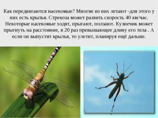 Как передвигаются насекомые? Многие из них летают -для этого у них есть крыль