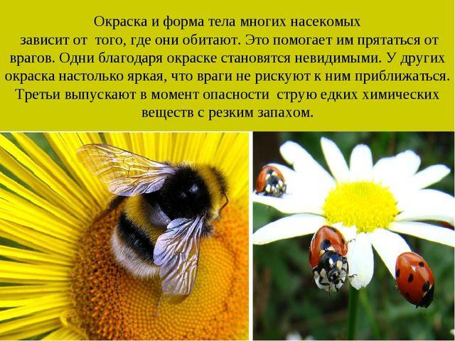 Окраска и форма тела многих насекомых зависит от того, где они обитают. Это п...