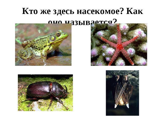 Кто же здесь насекомое? Как оно называется?