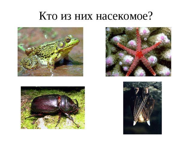 Кто из них насекомое?