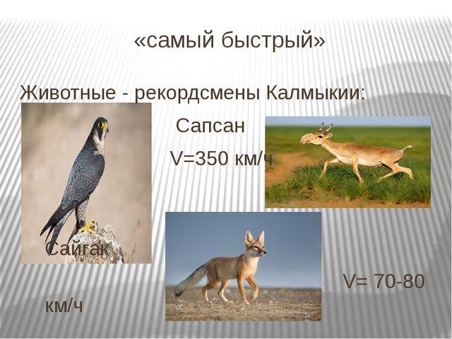«самый быстрый» Животные - рекордсмены Калмыкии: Сапсан V=350 км/ч Сайгак V=...