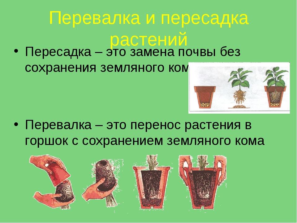 Перевалка и пересадка растений Пересадка – это замена почвы без сохранения зе...