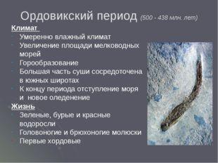 Ордовикский период (500 - 438 млн. лет) Климат Умеренно влажный климат Увелич