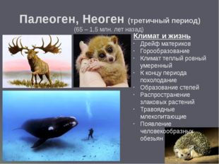 ЖИВОТНЫЙ МИР Некоторые животные сумели адаптироваться к усилившимся холодам,