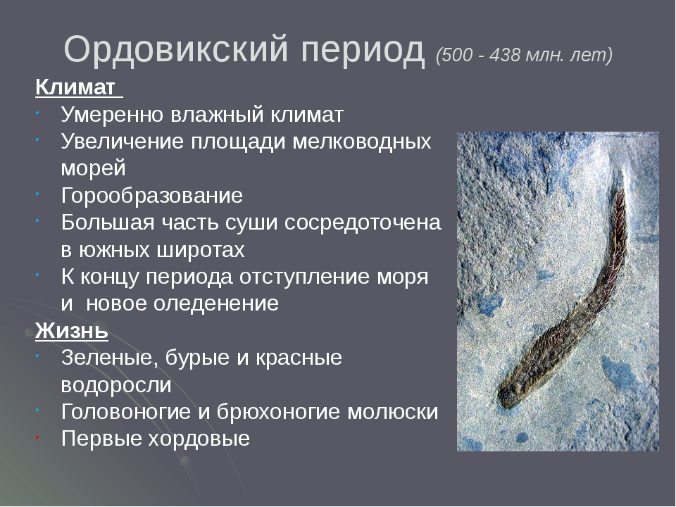Ордовикский период (500 - 438 млн. лет) Климат Умеренно влажный климат Увелич...