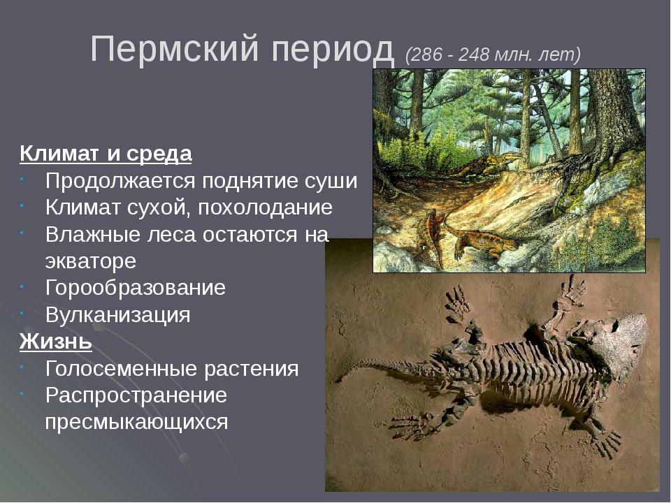 Пермский период (286 - 248 млн. лет) Климат и среда Продолжается поднятие суш...