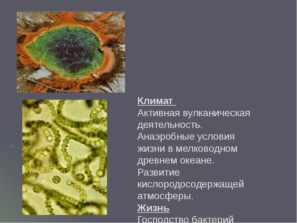 Климат Активная вулканическая деятельность. Анаэробные условия жизни в мелков...