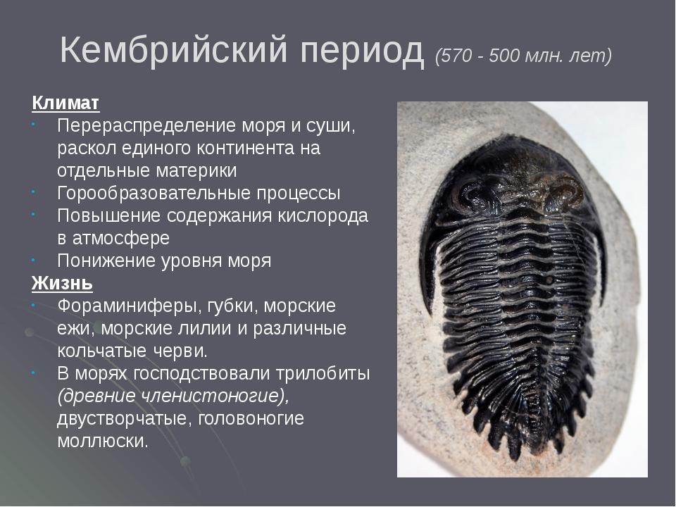 Кембрийский период (570 - 500 млн. лет)  Климат Перераспределение моря и су...