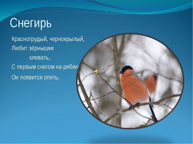 Снегирь Красногрудый, чернокрылый, Любит зёрнышки клевать, С первым снегом на...