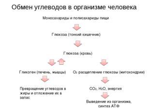 Обмен углеводов в организме человека Моносахариды и полисахариды пищи Глюкоза