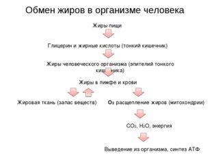 Обмен жиров в организме человека Жиры пищи Глицерин и жирные кислоты (тонкий