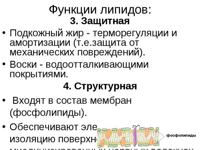 Функции липидов: 3. Защитная Подкожный жир - терморегуляции и амортизации (т....