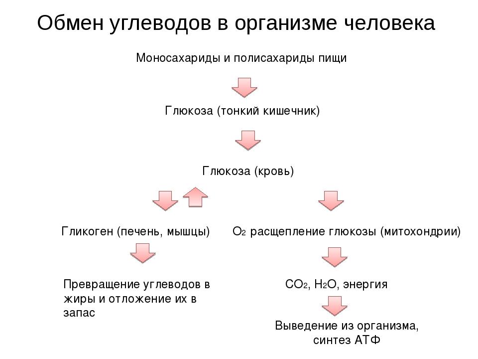 Обмен углеводов в организме человека Моносахариды и полисахариды пищи Глюкоза...
