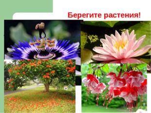 Берегите растения!