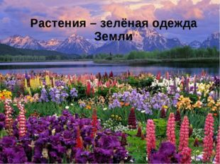 Растения – зелёная одежда Земли