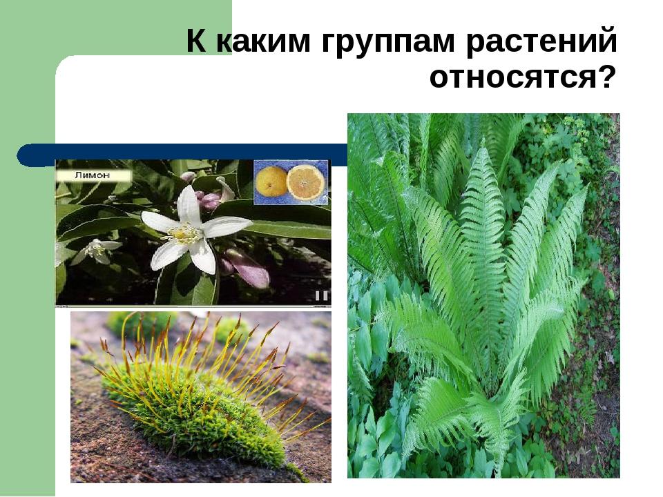 К каким группам растений относятся?