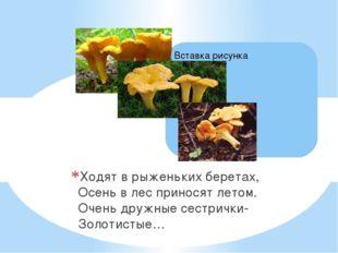 Ходят в рыженьких беретах, Осень в лес приносят летом. Очень дружные сестричк