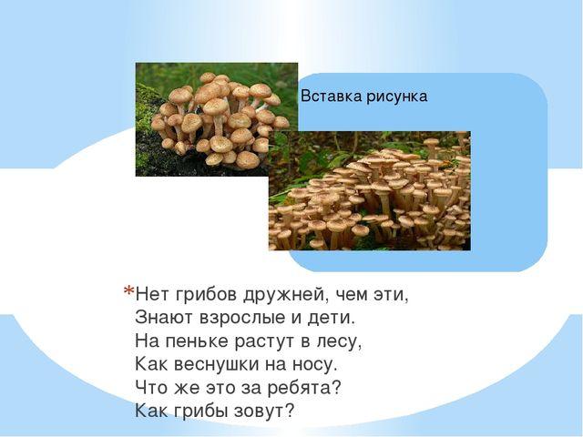 Нет грибов дружней, чем эти, Знают взрослые и дети. На пеньке растут в лесу,...