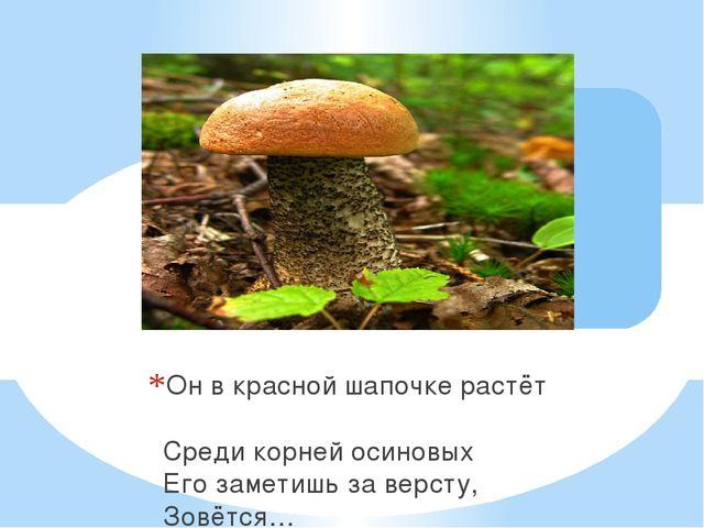 Он в красной шапочке растёт Среди корней осиновых Его заметишь за версту, Зов...