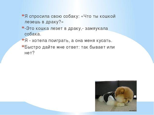 Я спросила свою собаку: «Что ты кошкой лезешь в драку?» -Это кошка лезет в д...