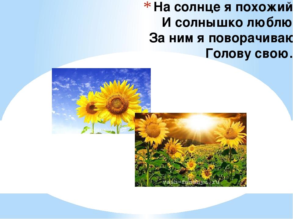 На солнце я похожий, И солнышко люблю. За ним я поворачиваю Голову свою.