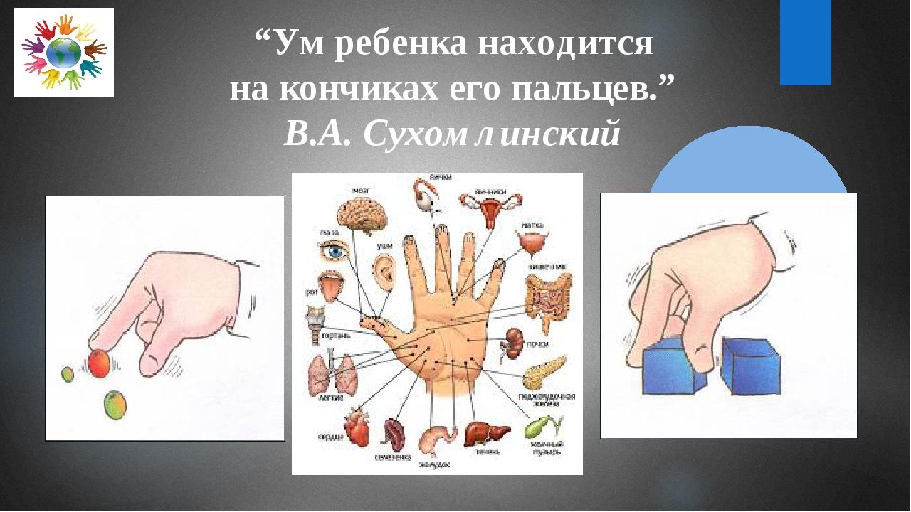 """""""Ум ребенка находится на кончиках его пальцев."""" В.А. Сухомлинский"""