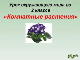 Урок окружающего мира во 2 классе «Комнатные растения»