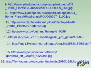 9. http://www.plantopedia.ru/upload/plantopedia/04 _Home_Plants/S/Sansevieria