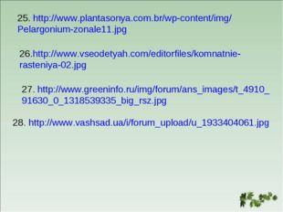 25. http://www.plantasonya.com.br/wp-content/img/ Pelargonium-zonale11.jpg 26